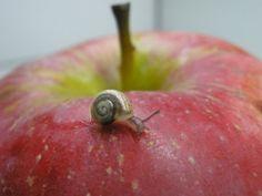 little mini snail child by petrufa