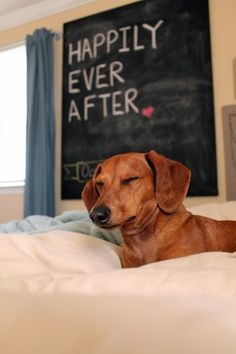 Find out happens on the non-adventures days with Ammo the Dachshund.