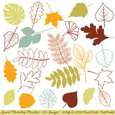 Leaves Photoshop Brushes ~~ The Leaves Photoshop Brush Set contains 23 high-resolution brushes within an ABR file. The ABR file works with Photoshop CS and above and Elements 4 and above.     The brushes are 300 dpi and 2500 pixels wide