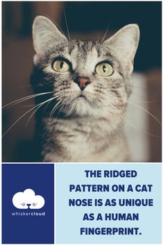 Custom Veterinary Websites, SEO, and Cloud Hosting Veterinarian Quotes, Cat Nose, Did You Know, Clinic, Dog Cat, Tech, Marketing, Cats, Gatos