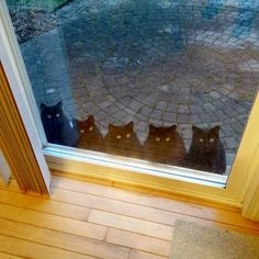 Greetings from 5 black cats