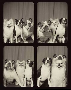 Click To See What Happens When You Put Dogs In a Photo Booth (12 PICS)