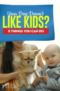 Why don't some dogs like children? I can reassure you right away, your dog doesn't have a hidden agenda to hate on kids. Aside from many, every day causes for this phenomenon, certain genetic predispositions can be established and used to help us understand the problem. #dogs #kids #children #pets #dogcare #parenting #parents Dogs And Kids, Dog Care Tips, Pet Grooming, Doge, Training Tips, Dog Owners, You Can Do, Best Dogs, Your Dog