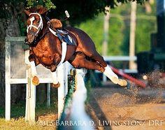 Buh-bye  Credit: Barbara D. Livingston  An interesting Saratoga morning. Love this shot!
