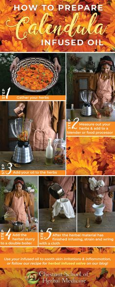 How to Prepare Calendula Infused Oil // Chestnut School of Herbal Medicine #calendula #medicinemaking #herbalmedicine #herbalist #herbalife #herbs