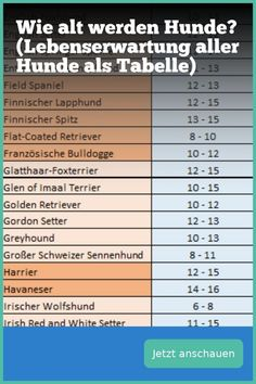 How old do dogs get? (Life expectancy of all dogs as a table-Wie alt werden Hunde? (Lebenserwartung aller Hunde als Tabelle) Here you can find the life expectancy of many dogs in tabular form - All Dogs, I Love Dogs, Cute Dogs, Dog Breeds Little, Dog Ages, Cat Supplies, Dog Walking, Dog Life, Animals And Pets