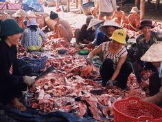 Nghiên cứu tách chiết và thủy phân collagen từ da cá Tra (Pangasianodon h... | Vietnam Aquaculture Network