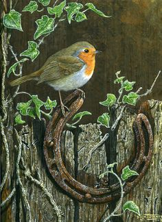 The Art of Dick Twinney - Cornish Wildlife Artist Little Birds, Love Birds, Beautiful Birds, Bird Pictures, Pictures To Paint, Robin Bird, Color Pencil Art, Tier Fotos, Bird Drawings