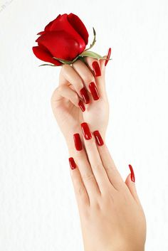 Glamorous women just adore long red nails and roses. Rose Gold Nails, Red Nails, Vacaciones Gif, Flower Girl Photos, Nagellack Design, Nails Only, Romantic Roses, Love Rose, Color Splash