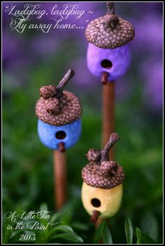 I think these are Ladybug homes,lol.How sweet.