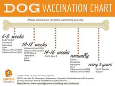Puppy Training: Dog Vaccination Guide & Everything You Need to Know About Vaccinating Your Dogs – Sam ma Dog Training Dog Health Tips, Pet Health, Health Care, Puppies Tips, Dogs And Puppies, Education Canine, Puppy Care, Pets, Pet Beds