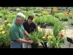 How to Prune Daylilies