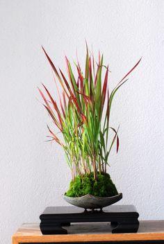 Kusamono & New Pots