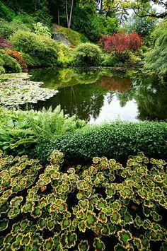 Butchart Gardens, Victoria, B.C. Amazing Gardens, Beautiful Gardens, Landscape Design, Garden Design, Buchart Gardens, Gardens Of The World, Victoria British, Sunken Garden, Parks