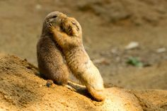 Prairie dogs' love by Jan Pelcman on 500px