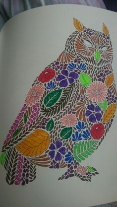 Owl From Animal Kingdom