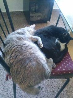 Sigrid y Lazy se echan juntas unas siestas tremendas, ja, ja, ja...