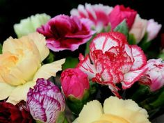 # Carnations Flowers Bright Hd Flowers, Bouquet Flowers, Bright Wallpaper, Carnations, Wallpaper Backgrounds, Wallpapers, Rose, Plants, Color