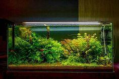 Day 45, 100x45x45 #aquascape #nature #aquarium #plants #aqua #crystal #water #tank #fishtank #plantedtank #scape #design #shrimp #Amano #miraqua #aquavrn #vrn