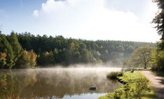 *Forest of Dean, Gloucestershire