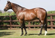 Galileo (IRE) 1998 bay TB stallion. Sadlers Wells x Urban Sea. Winner of 2001 Epsom Derby, Irish Derby and King George V Stakes.