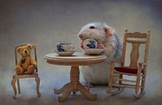 Cat Drinking Tea | ... Pictures Videos of Funny Cute Cats, Dogs, and other Amazing Animals