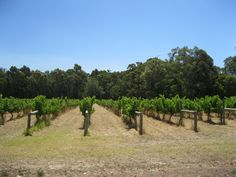Vineyard at Margaret River