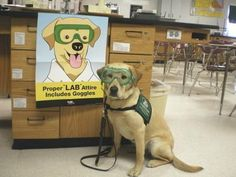 I'm Ready for Science! Adorable mascot promotes science class safety. <3