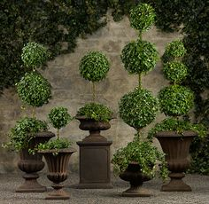 """The art of topiary, practiced by landscapers and gardeners for thousands of years, is truly timeless. We've chosen English ivy to create our elegant ball-and-stem topiary sculptures, prized for its longevity and the beauty of its deep-green leaves."" Taken from Restoration Hardware"