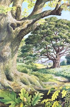 An Illustration from the Ladybird Book of Trees. Woodland Illustration, Botanical Illustration, Illustration Art, Book Illustrations, Landscape Drawings, Landscape Art, Landscape Paintings, Landscapes, Art Et Nature