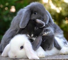 A mountain of bunnies
