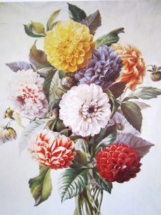 vintage botanical flowers - Pesquisa Google
