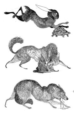 Rusakko-Art – Pin to pin Animal Sketches, Animal Drawings, Cool Drawings, Art Sketches, Half Elf, Desenho Tattoo, Wow Art, Creature Design, Gravure