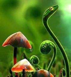 Amazing Pics: Amazing Photoshop Matched With Plants And Animals