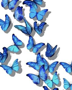 Uploaded by 👩💻✨. Find images and videos about blue and butterfly on We Heart It - the app to get lost in what you love. Baby Blue Wallpaper, Butterfly Wallpaper Iphone, Happy Wallpaper, Iphone Background Wallpaper, Kawaii Wallpaper, Cool Wallpaper, Rainbow Aesthetic, Blue Aesthetic, Aesthetic Pastel Wallpaper