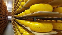 If you love cheese like I love cheese, you'll thank me for this introduction to the Oxford County Cheese Trail. It makes for a tasty solo road trip.
