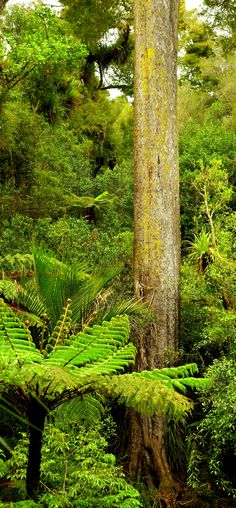 Nikau Loop Walk to Bell Track to NZ tallest Kahikatea Tree return New Zealand Art, New Zealand Travel, Best Travel Deals, Kiwiana, Tourist Information, Tree Wallpaper, The Beautiful Country, Tree Forest, South Island