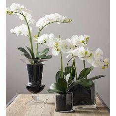 Orchids Orchid Arrangements And Bowls On Pinterest