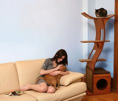 The most expensive and appreciated cat toy