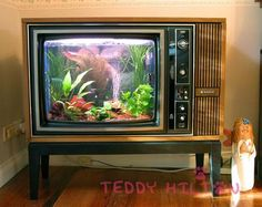 """This would be great since there are so few really good shows on TV Aquariums built in TV show """"Tanked"""" - Bing Images"""