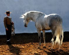 spanish horse Costume | Majestuosa Belleza - caballos árabes y andaluces