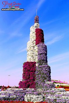Dubai Miracle Garden. Extremely Mesmerizing With 45 Million Flowers (24 Pictures)