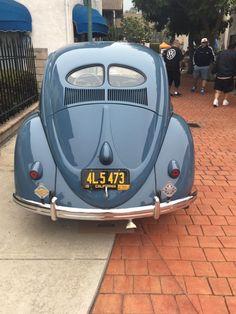 Split Window Beetle