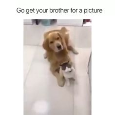 Haha Bestie Goals D Bestie Goals Haha is part of Cute animals - Funny Animal Memes, Funny Animal Videos, Cute Funny Animals, Funny Animal Pictures, Cute Baby Animals, Funny Cute, Funny Dogs, Animals And Pets, Cute Cats