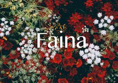 """Meaning: Unknown, but possibly derived from the Greek word """"Phaenna"""", which means """"shining"""". Informal version: Ina It's pronounced """"Fah-ee-NAH"""", but if you're not sure, refer to this very catchy '90s song, that repeats the name several thousand times."""