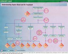 Evolve Case Study Answers pdf