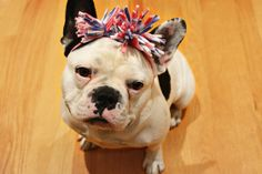 An adorable DIY patriotic headband for a pup from @Darby Smart! :)