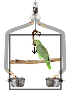 Complex foraging toy idea for large parrots: By pulling the string, springs release food into tubes (two or more) and in to bowls. Bird has to move from action point to get to food. Cage not to scale, only to show mechanism! Parrot, bird, enrichment, foraging, toy.