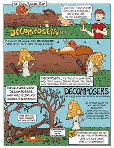 Ecosystem Interactions: Decomposers Comic with Doodle Notes Decomposers play a big role in an ecosystem! They are the organisms in charge of cleaning up all the dead plants and animals and recycling them back into the Earth. Without decomposers, our Education Middle School, Middle School Grades, Science Comics, Science Doodles, Reluctant Readers, Visual Learning, Biomes, Earth Science, Study Tips