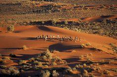The Bushmen's Kalahari Desert, Molopo, South Africa. Life Changing Trip # 276